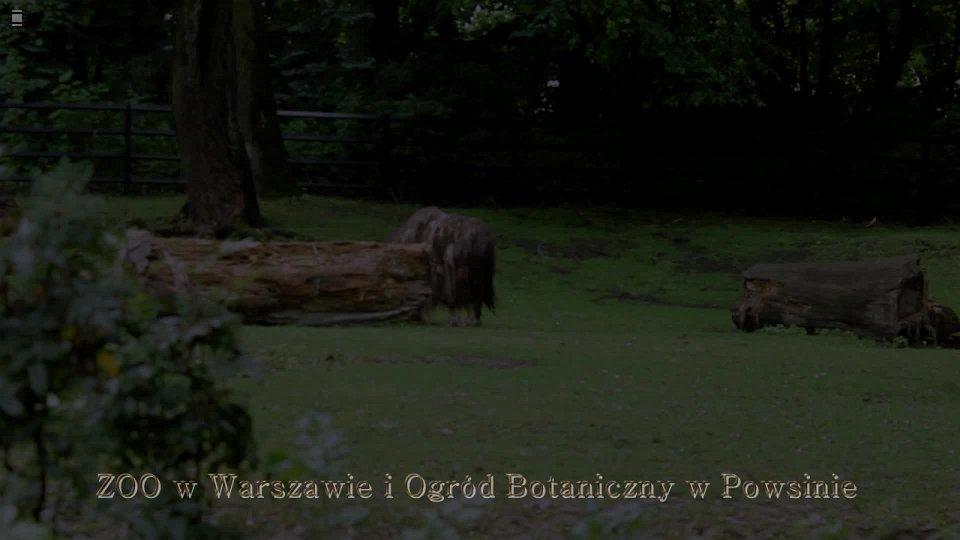 zoo-powsin